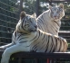 International Exotic Animal Sanctuary, Inc.