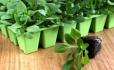 Cultivate Hydroponic & Organic Garden Center