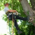 Danville Tree Service