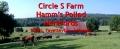 Circle S Farm, Hamms Herefords