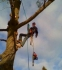 A Cut Above The Best - Tree Service