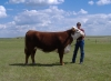 Photo 13 agriculture - Circle s Farm, Hamms Herefords