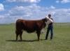 Photo 12  in Arkansas - Circle s Farm, Hamms Herefords