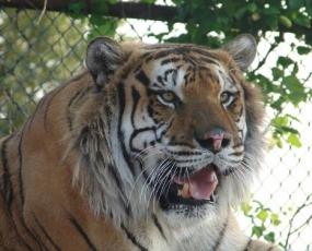 International Exotic Animal Sanctuary, Inc.