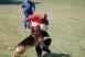 canine training