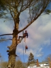 Experienced climbing and professional service