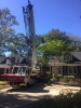 Tree removal service columbia sc
