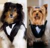 Specialty pet apparel