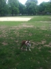 Ollie at the dog run