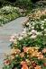 Rockfeller Rose Garden