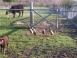 Always Somethin' Farm - Mansfield, Pennsylvania - Picture 14