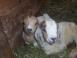 Always Somethin' Farm - Mansfield, Pennsylvania - Picture 13