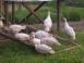 Always Somethin' Farm - Mansfield, Pennsylvania - Picture 10
