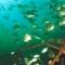 Coastal scuba - photo 2