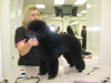 Photo 20 animals & pets - American Grooming Services Academy