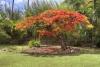 Photo 19  in Hawaii - Haiku Plantation inn