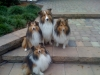 Rupp pups